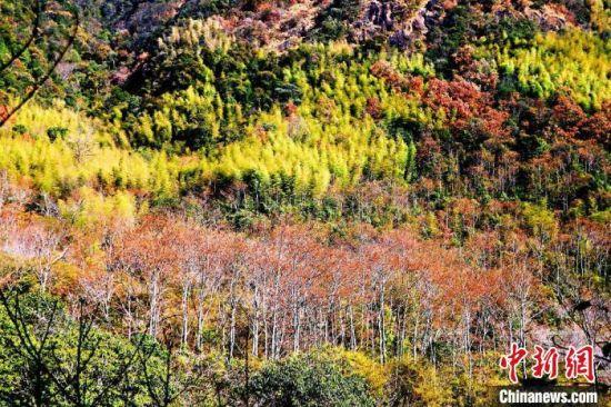 保护区内植物呈现多样性。 王东明 摄