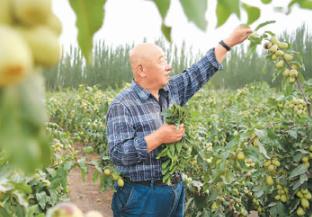 【中国脱贫传奇⑧】记者手记:石榴籽精神是最大的底气