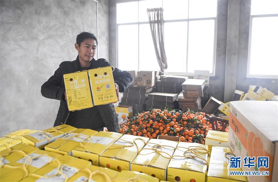 奉节脐橙:拓宽销售渠道 提高产业效益