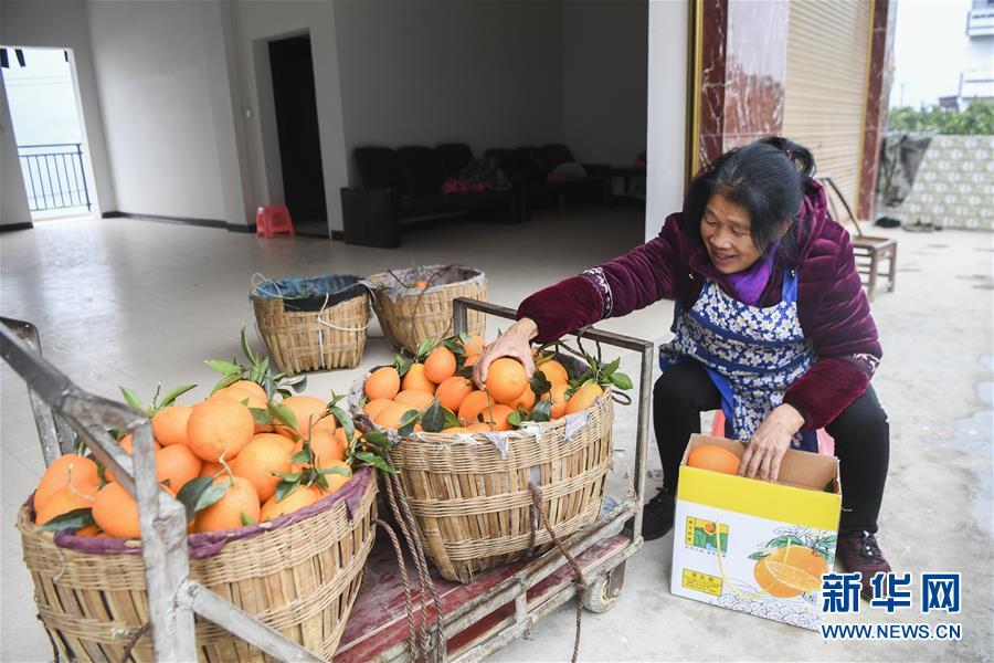 重庆奉节脐橙:拓宽销售渠道 提高产业效益