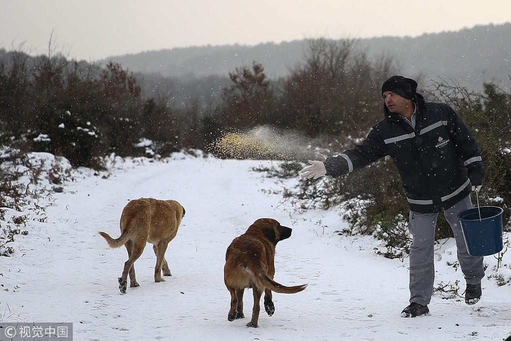 雪中送炭!土耳其兽医服务人员为流浪狗分发食物