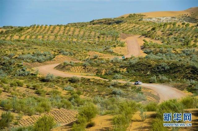 资料图:库布齐沙漠中的人工绿洲。.jpg