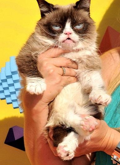 quot;不爽猫 quot;离世 曾狂揽1亿美元成为猫界 quot