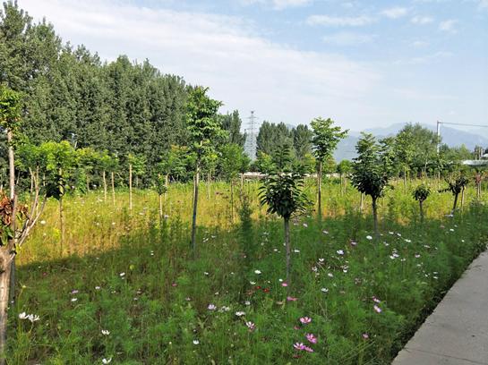 西安高新区:加速城乡一体化融合发展 让河清岸绿风景美如画