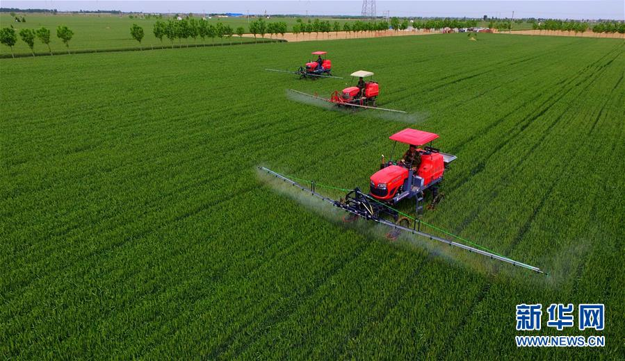 海外网评:确保粮食安全,中国成为全球样板_英国新闻_首页 - 英国中文网