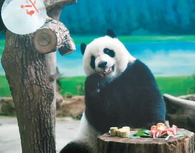 "<b>台湾有一群""熊猫粉""</b>"
