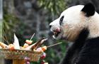 """大熊猫""""撸串""""迎新年"""