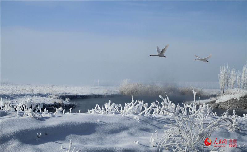 伊犁河湿地雾凇之美(图)
