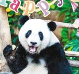 """马来西亚为熊猫""""谊谊""""庆生"""