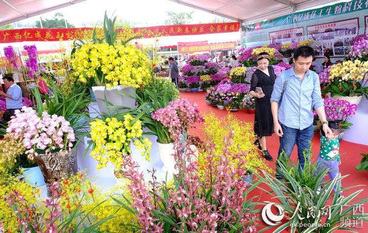 广西南宁:迎春花市迎新年