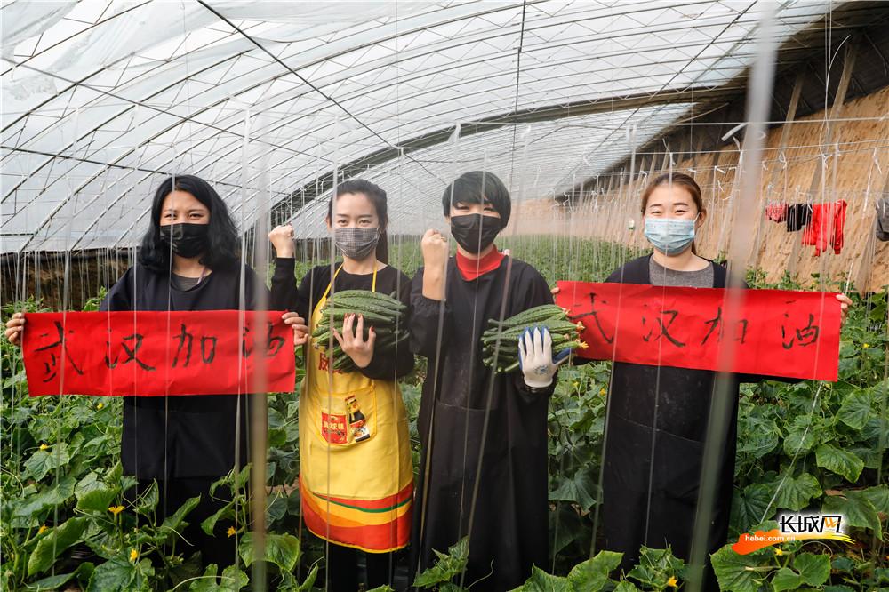 河北村民自發捐贈20噸黃瓜馳援武漢
