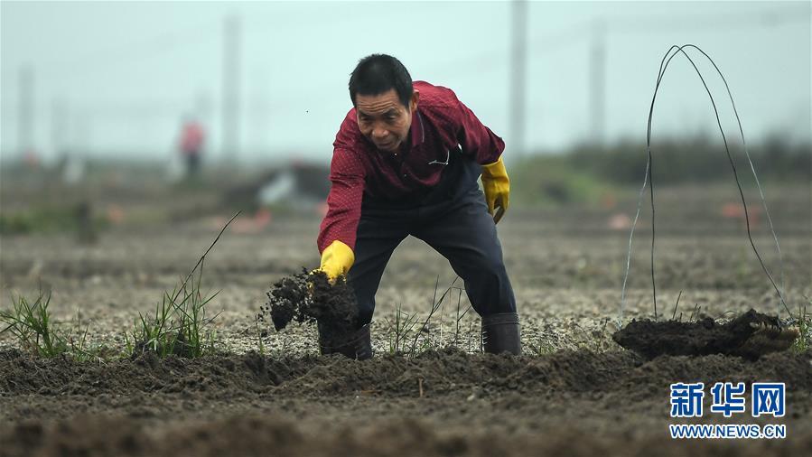 广西钦州:紧抓时令忙春种
