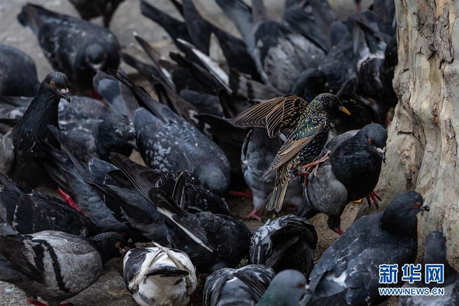 空城巴黎:小鸟上街 鸭子当道