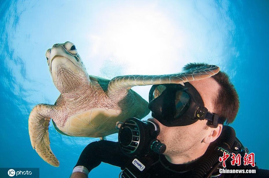 世界海龟日 走进地球最古老的海洋精灵