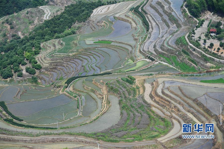 (环境)(4)福建政和:保护农业生态资源 展现梯田独特景观