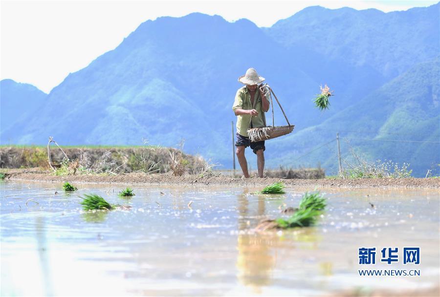(环境)(3)福建政和:保护农业生态资源 展现梯田独特景观
