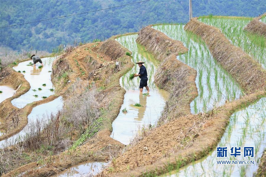 (环境)(1)福建政和:保护农业生态资源 展现梯田独特景观