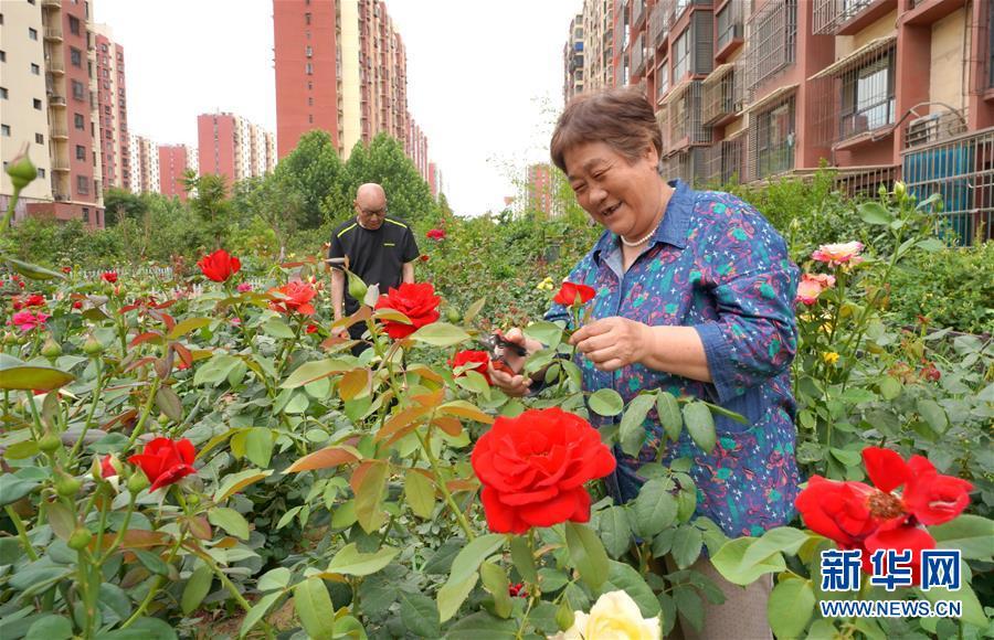 河北唐山:绿地认养 扮靓家园