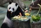 台北:大熊猫圆仔7岁生日