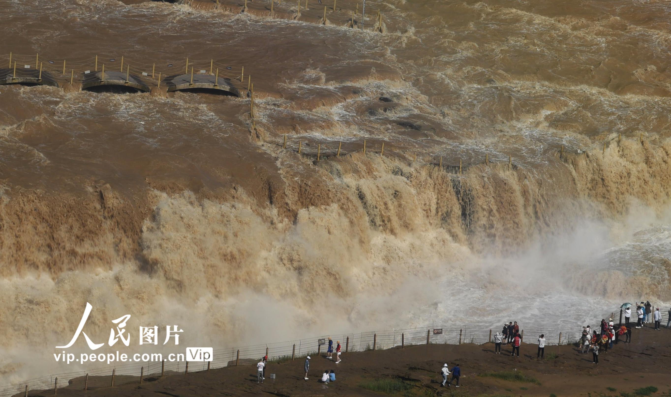 黄河壶口瀑布水量增大形成绵延百米瀑布群