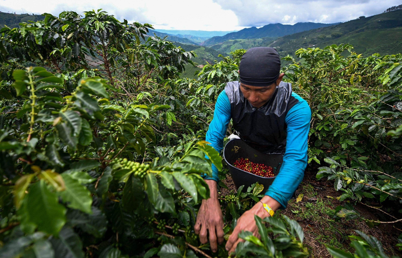 """哥伦比亚咖啡业者""""深耕""""中国市场"""
