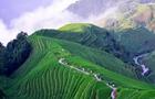 广西龙胜:绿染梯田引游人