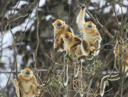 小康路上·神农架篇短视频《猴有趣》
