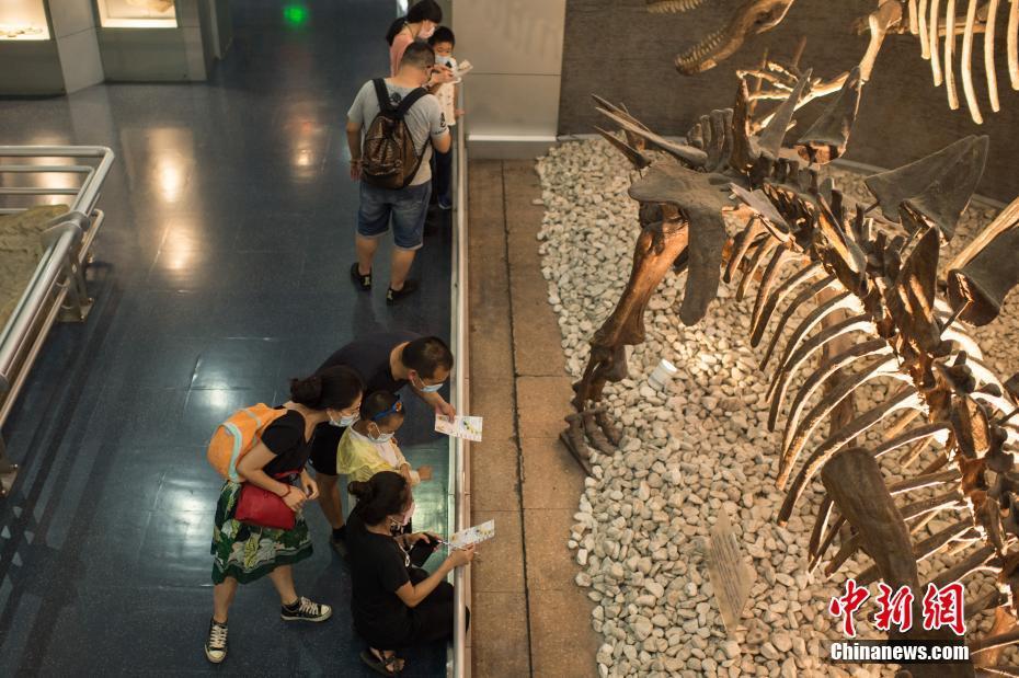 探访北京自然博物馆之夜