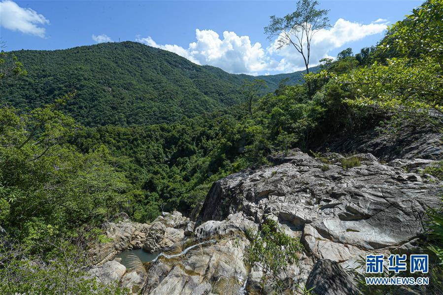 探訪海南熱帶雨林國家公園