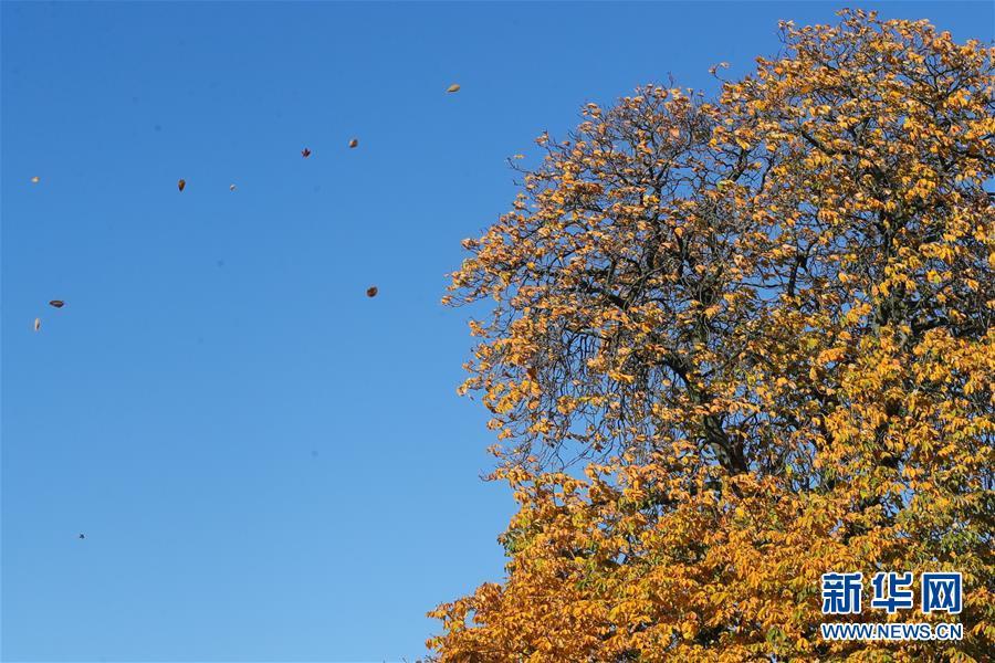 比利时:秋天的色彩