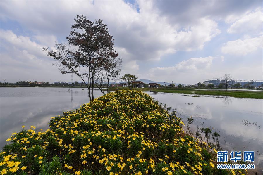 """浙江富阳:城市""""生态绿肺""""亮相"""