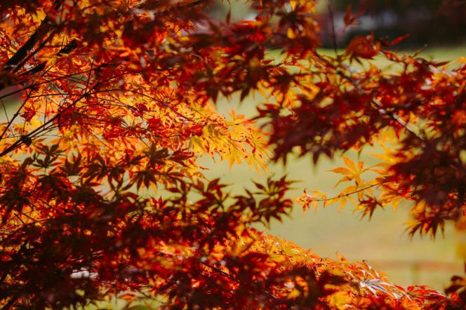 眉山洪雅:秋叶景色