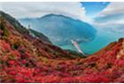 三峡红叶漫山谷