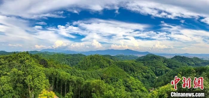 广东梅州梅城百岁山森林公园(资料图)。 陈骥旻 摄
