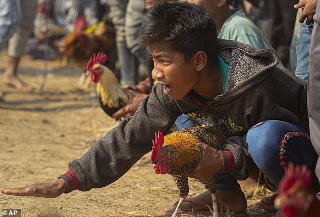 23528628-0-A_boy_shouts_to_encourage_his_rooster_during_a_cockfight_near_Ja-a-6_1579276419149.jpg