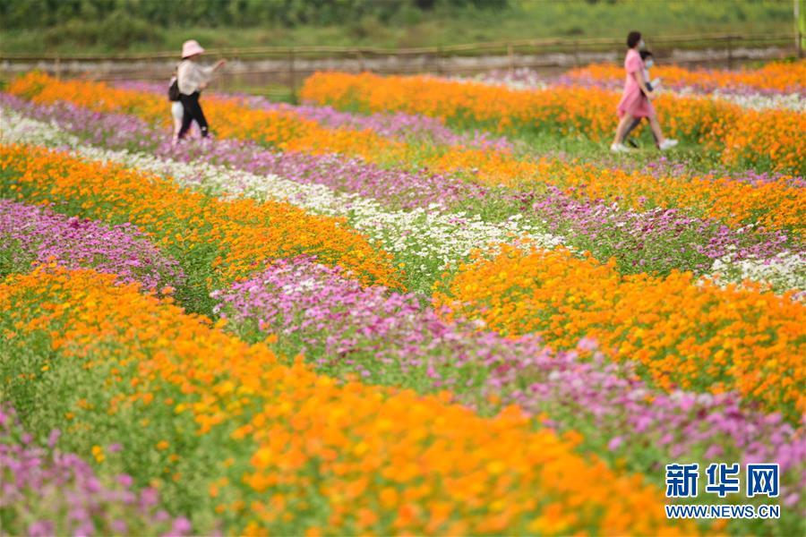 #(环境)(5)春暖花开