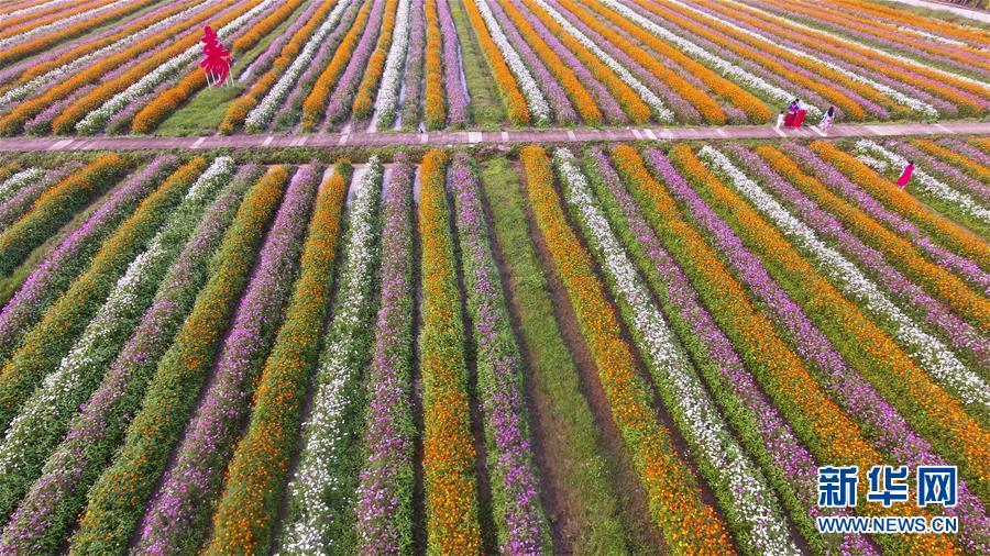 #(环境)(6)春暖花开