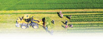 农业稳,经济底盘就稳!