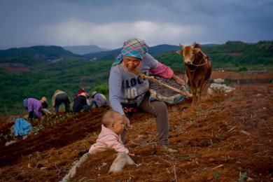 """农业农村部携手拼多多等电商平台打造100个示范县,解决农产品""""卖难""""825.png"""