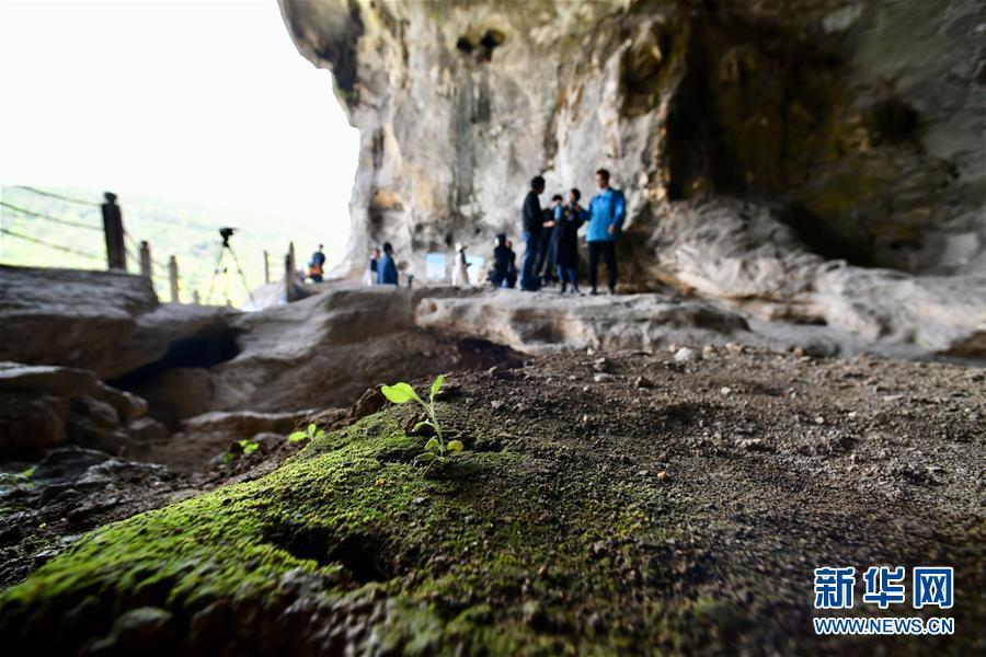 (图文互动)(3)聆听18万年前的远古回声——福建万寿岩遗址保护纪实