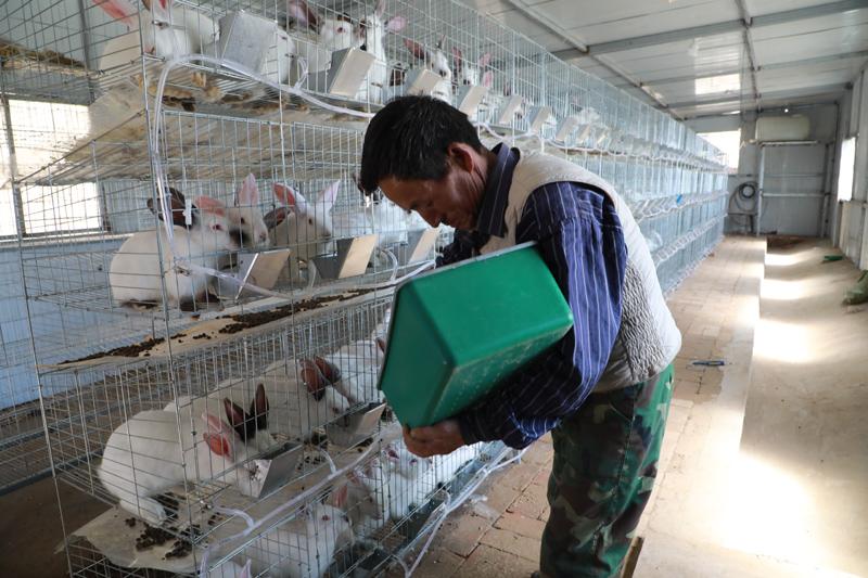 甘肃省镇原县方山乡贾山村低保户杨明世在给家里饲养的肉兔喂食。新华社记者 胡伟杰 摄.jpg