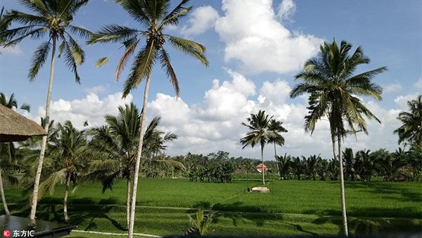 """长滩""""封岛""""持续吹热巴厘岛 印尼政府计划打造10个新巴厘岛"""