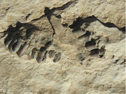 科学家在干旱的阿拉伯半岛发现了12万年前的人类脚印(1)(1)639.png