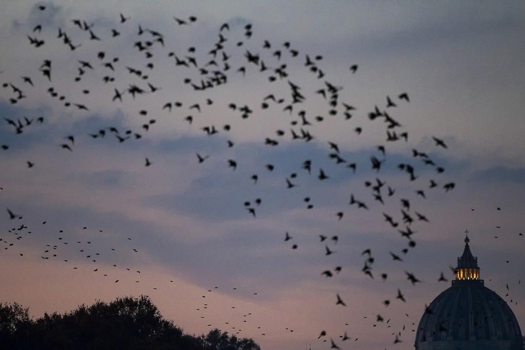 成群椋鸟掠过意大利罗马天空 遮天蔽日蔚为壮观