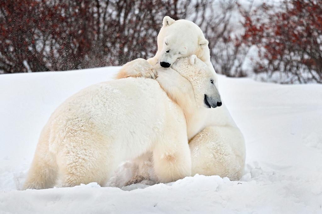 盘点动物暖心依偎照 天冷了就要抱团取暖!