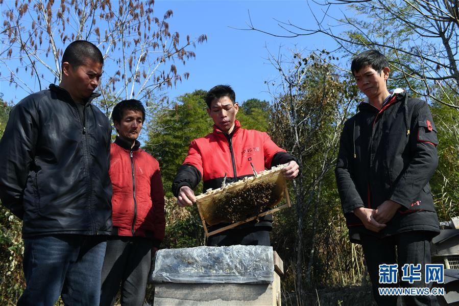 脱贫农户成为养蜂产业发展带头人