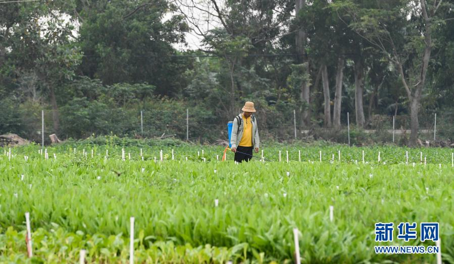 海南近两个月出岛冬季瓜菜36万吨