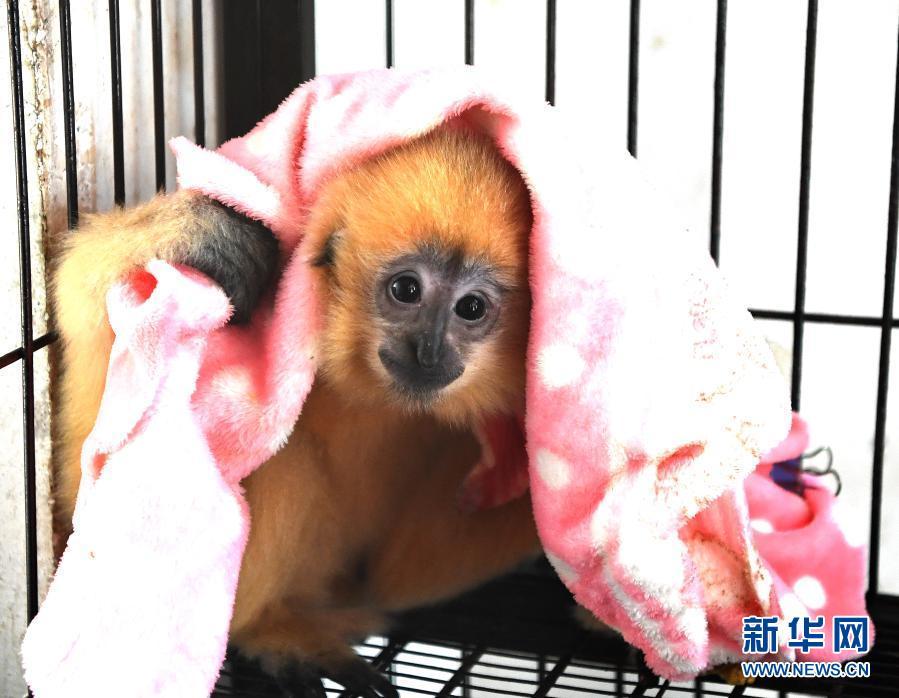 南宁市动物园帮助动物温暖越冬