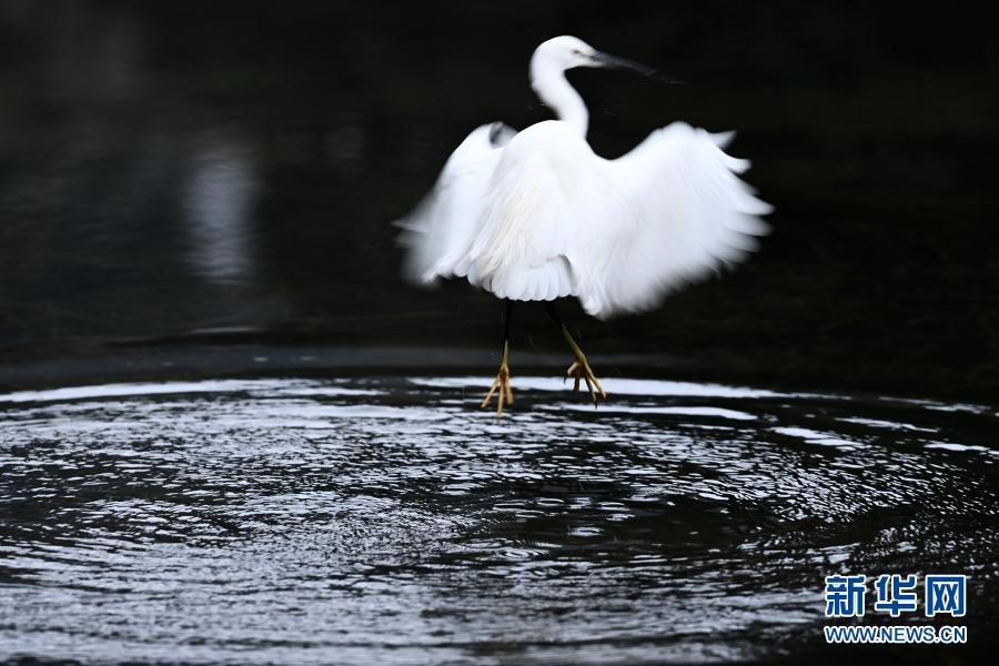 贵阳:黔灵山 冬鸟欢