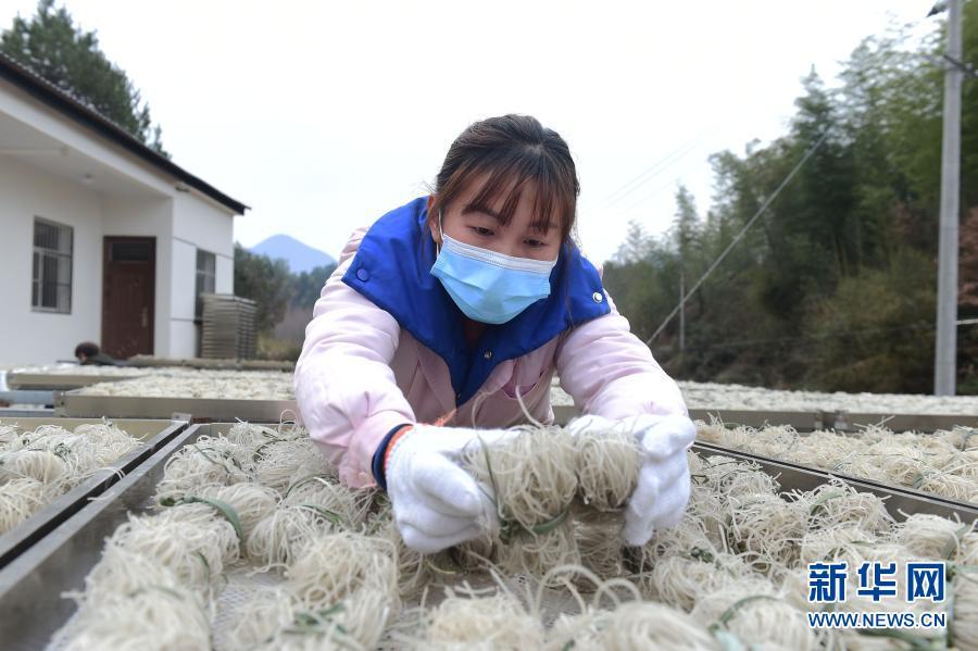 安徽黄山:粉丝加工助增收